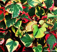 Colourful Leaves by Donna Chapman