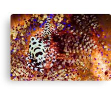 Shrimps from Hell! Canvas Print