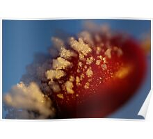 Red Berry In A Golden Sunset Poster