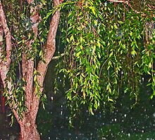 Weeping Willow In The Rain by daphsam