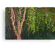 Weeping Willow In The Rain Canvas Print