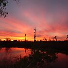 Northwest Florida Sunsets by May Lattanzio