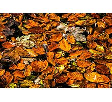 Fall Leaves Photographic Print