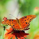 Orange Delight by Donna Adamski
