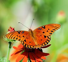 Orange Delight by Donna Adamski