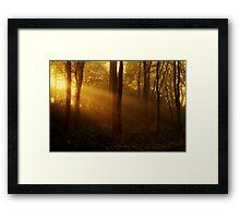 Autumn Rays Framed Print