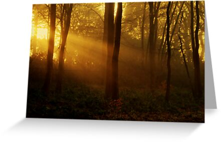 Autumn Rays by Paul Gibbons