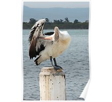 Pelican in Pole Position Poster
