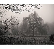 Misty Willow Photographic Print