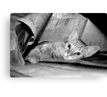 newspaper cat  Canvas Print