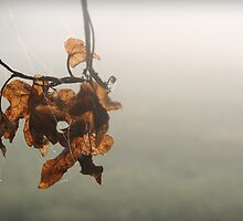 Clump of Leaves by Charlie Bookout