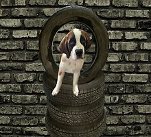 SOMETIME ONE TIRES OF THE OBSTACLES WE GO THROUGH IN LIFE...SAINT BERNARD PUPPY..PILLOWS,TOTE BAGS,SAMSUNG CASES,ECT by ✿✿ Bonita ✿✿ ђєℓℓσ