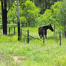 Bluff is a Horse's Paradise  by 4spotmore