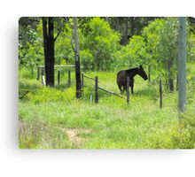 Bluff is a Horse's Paradise  Canvas Print