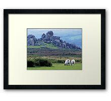 Dartmoor sheep Framed Print