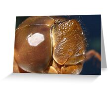 Face of a Dragonfly Greeting Card