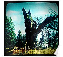 Ttv: Tree Dead Center Poster