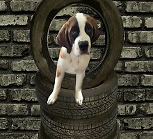 SOMETIME ONE TIRES OF THE OBSTACLES WE GO THROUGH IN LIFE...SAINT BERNARD PUPPY..PICTURE AND OR PRINTS ECT. by ✿✿ Bonita ✿✿ ђєℓℓσ