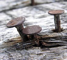 Steel Mushrooms by Brian R. Ewing