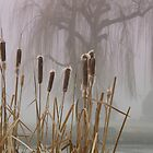 Cat-tails and fog by Cricket Jones