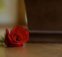 Rose by Brooke Triplett