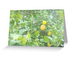 Large Lemons Greeting Card
