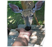 doe kisses: Face-to-doe face Poster