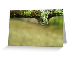 Drops with Lichens  Greeting Card