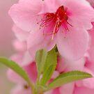 Blossom by Lorraine Deroon