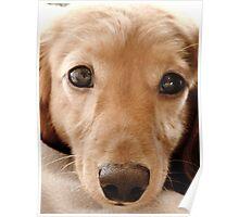 Puppy Dog Eyes Poster
