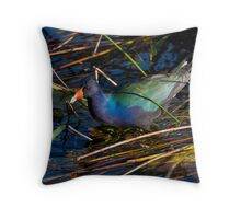 Purple Gallinule - Everglades National Park, Florida Throw Pillow