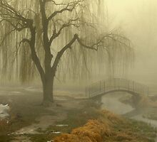 Fog and Trees by Cricket Jones