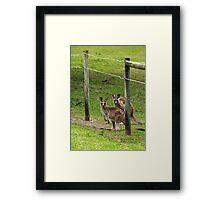 Kangaroos at Pambula Beach Framed Print
