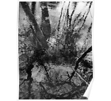 Waterlogged Trees Poster