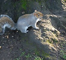 Squirell :] by LucyAnnx