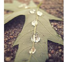 Line of Drops Photographic Print