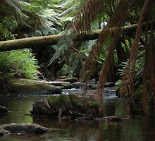 Otways Creek by Kristian Faul