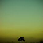 DAWN TREE by SIMON KEEPING