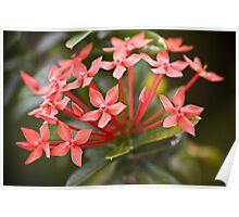 Seychelles flowers Poster