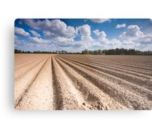 Norfolk Field Metal Print
