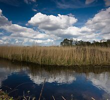 Reed bed in Norfolk by Chris  Ridley