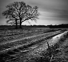 WINTER FIELD by SIMON KEEPING