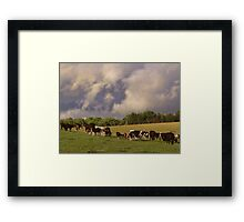 'Til the cows come home Framed Print