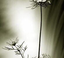 Soft Flow by David Piszczek