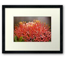 Seychelles flowers Framed Print
