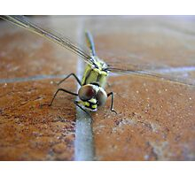 Dragon-fly Photographic Print