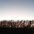 Hedgerow Sunset by JoCr