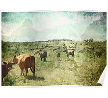 CountryLife Poster
