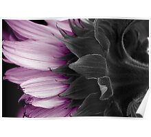 MAUVE SUNFLOWER Poster