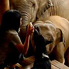 Feeding Time II by Louise Fahy